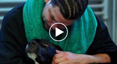 Consentono ai detenuti di occuparsi dei cani abbandonati. Quello che accade è inaspettato!