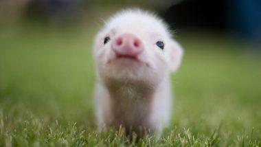 Top 15 animali carini!