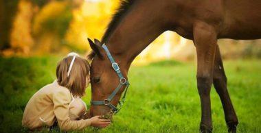 Vaccini; neanche un cavallo ne uscirebbe sano
