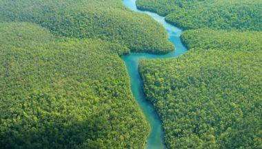 Read more about the article sentenza storica : La foresta amazzonica è diventata un soggetto giuridico