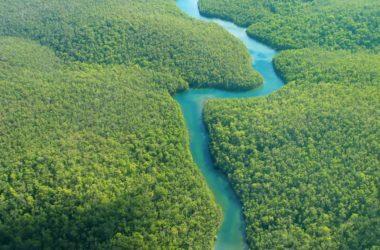 sentenza storica : La foresta amazzonica è diventata un soggetto giuridico