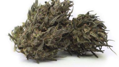 Attenzione ; il Consiglio superiore sanità boccia cannabis light