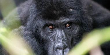 Il capitalismo, non l'umanità, sta sterminando gli animali selvatici – Come Don Chisciotte