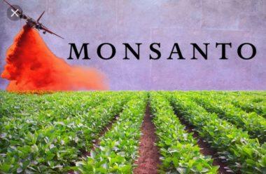 """Sam Murphey, dirigente della Monsanto, definisce ineffabilmente """"disinformazione"""", la corretta informazione."""