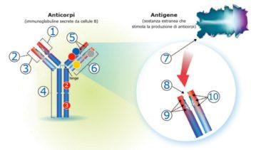 Terapia del plasma: anticorpi nella saliva nel muco e nel sangue umano