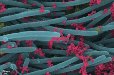 Scoperto il farmaco naturale contro il coronavirus: costa 3 euro