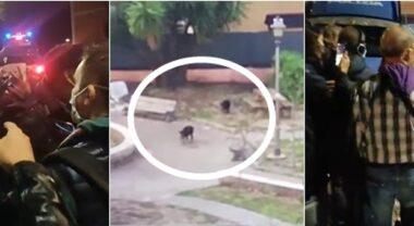 Roma, mamma cinghiale e 6 cuccioli uccisi in un parco dalla polizia.