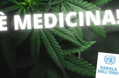 Ora è ufficiale: la Cannabis è una medicina